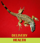 Delivery Health (Giovanni Di Domenico, Jim O'Rourke, Tatsuhisa Yamamoto) with Eivind Lønning