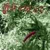 ASTRO, Lacy Foundation, Kariu, Les Belles Noiseuses, 濁朗, Yousuke Fuyama,...